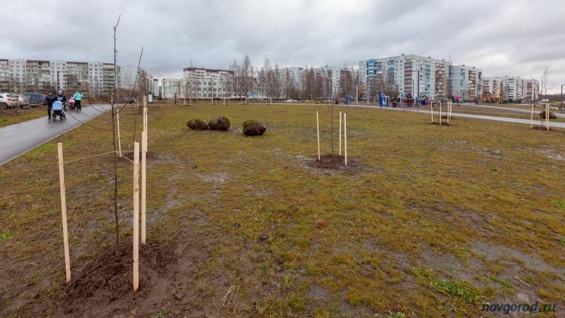 Высаженные деревья.