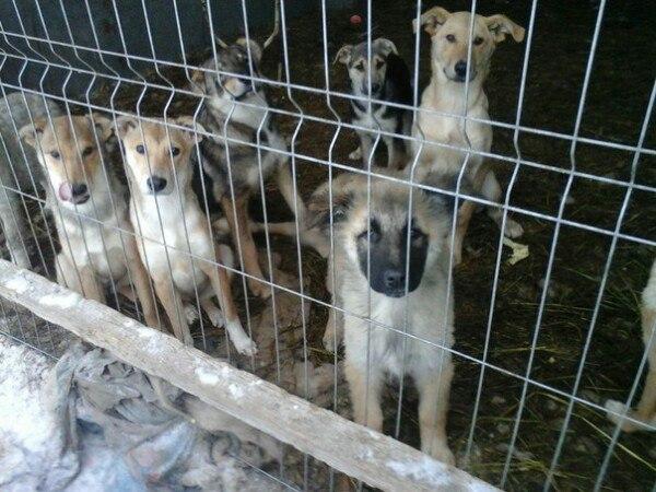 © Фото фонда помощи бездомным животным «Спасение»