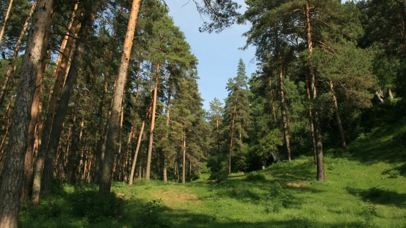 © Федеральное агентство лесного хозяйства
