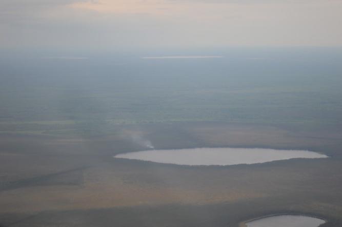© Фото комитета лесного хозяйства Новгородской области