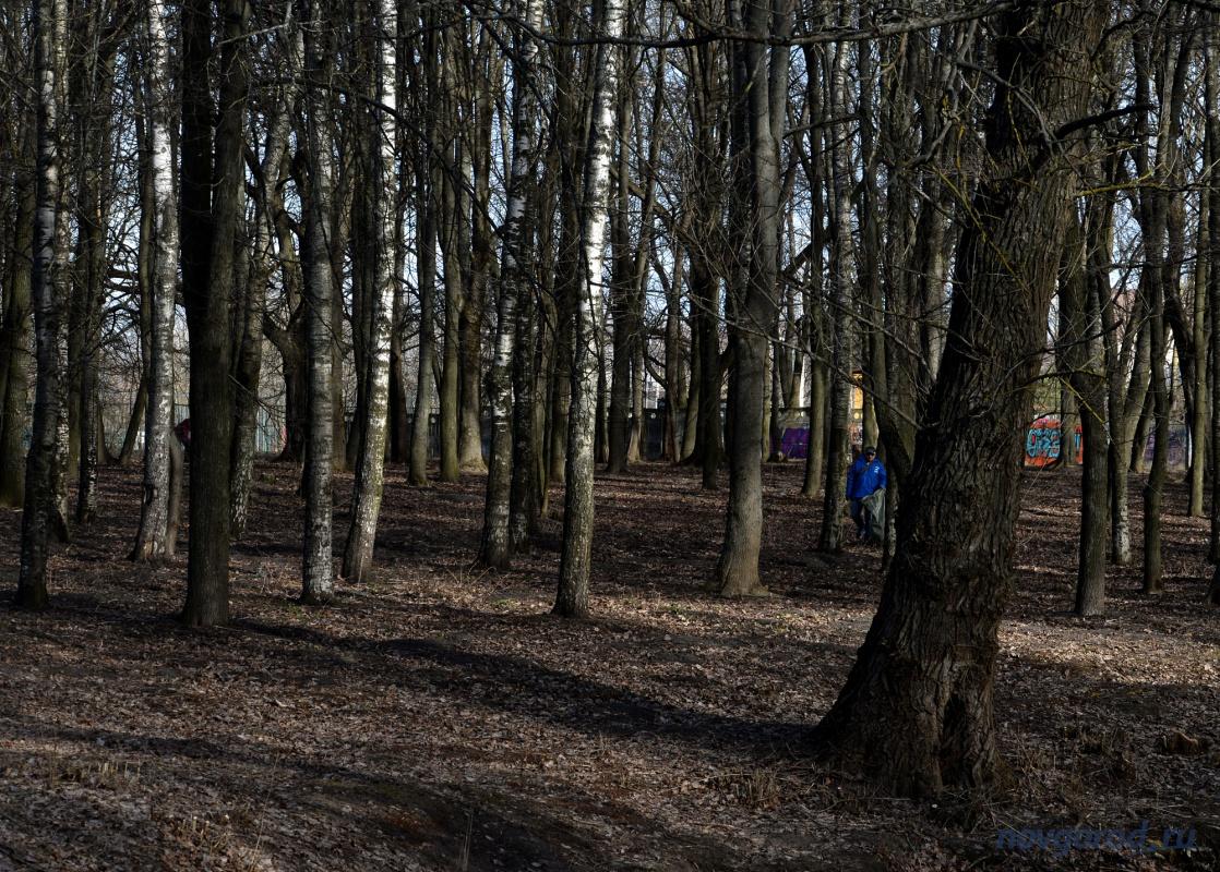 деревья новгородской области фото с названиями высоте
