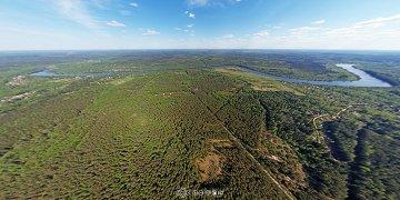 Район деревень Рышево и Жабицы. Правый берег Мсты, сосновый лес