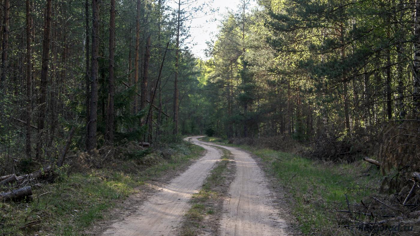 Дорога от деревни Сомёнка до Игнач Креста.